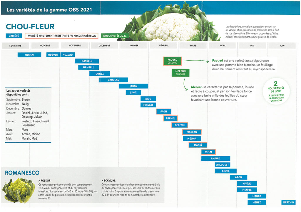 obs chou-fleur tableau 2021