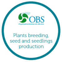 obs-presentation-plants-breeding-seed-seedlings-producer